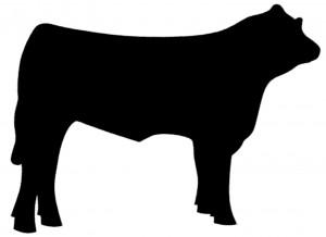 steersilhouette